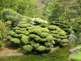 Topiaria em Jardim Oriental