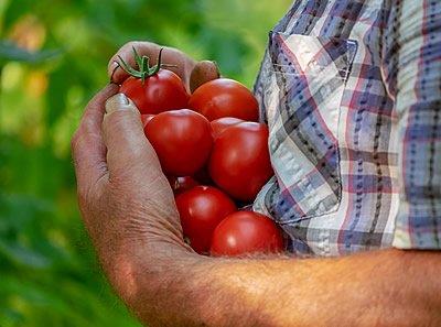 tomatoes-3702942_1920.jpg